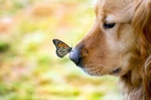 butterflydog